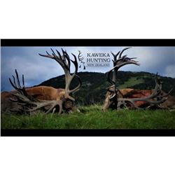5-Day/4-Night New Zealand Red Stag with Kaweka Hunting