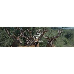 Argentina Red Stag for 1 hunter