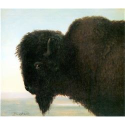 Buffalo Head by Albert Bierstadt