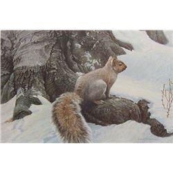 """Robert Bateman's """"Gray Squirrel"""" LE Canvas"""