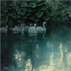 "Robert Bateman's ""Great Dunford Mute Swans"" LE Canvas"