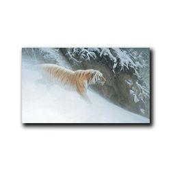 """Robert Bateman's """"Momentum- Siberian Tiger Showstopper"""""""
