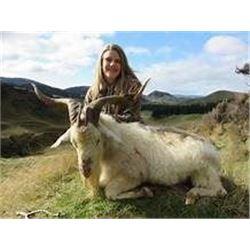 New Zealand 3 Day Alpine Goat Hunt