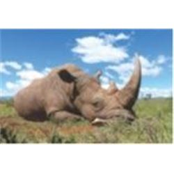 5 Day Vita Dart Hunt of a White Rhino