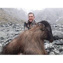 New Zealand Bull Tahr Hunt