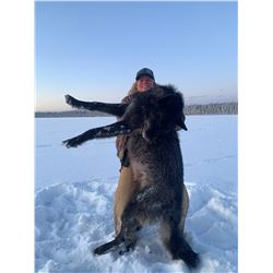 Wolf Hunt in Canada for (2) hunters with Wolf Hunting Adventures
