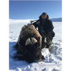 Musk Ox Hunt in Canada with Canadian High Arctic Adventures