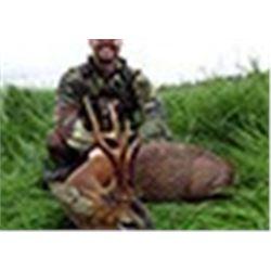 International Adventures Unlimited - Roe Deer Scotland