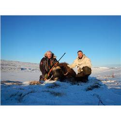 Greenland Musk Ox Hunt
