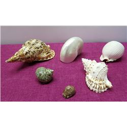 Qty 6 Natural Seashells - Nautilus, Conch, Turban, etc