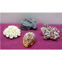 Qty 4 Natural Seashells & Coral Pieces - White & Black Coral, Brown Helmet Conch Shell