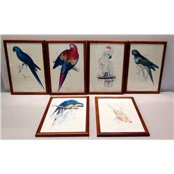 "Qty 6 Framed National Geographic Bird Art 14"" x 21"""