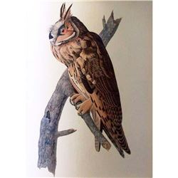 c1946 Audubon Print #383 Long-Eared Owl