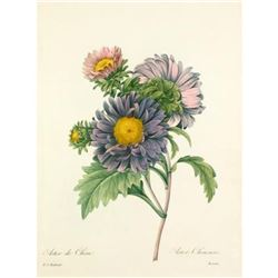 After Pierre-Jospeh Redoute, Floral Print, #9 Aster de Chine (Aster)