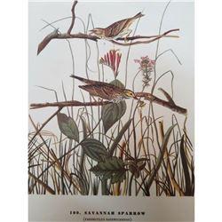 c1946 Audubon Print #109 Savannah Sparrow