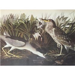 Audubon Print, #236 Black-Crowned Night Heron