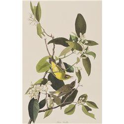 c1946 Audubon Print #163 Yellow-Palm Warbler