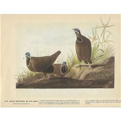 c1946 Audubon Print #172 Blue-Headed Quail-Dove