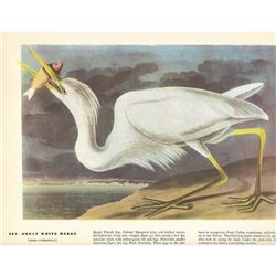 c1946 Audubon Print #281 Great White Heron