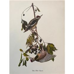 c1950 Audubon Print, #190 Yellow-Bellied Sapsucker