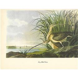 c1950 Audubon Print, Long-Billed Curlow