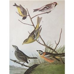 c1946 Audubon Print, #400 Finches and Tanager