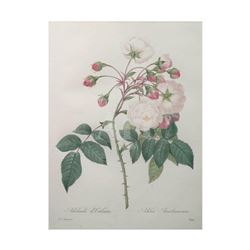 After Pierre-Jospeh Redoute, Floral Print, #126 Adelaide d'Orleans (Rose)