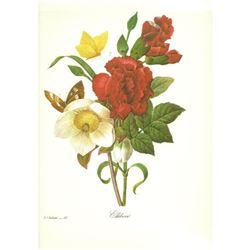After Pierre-Jospeh Redoute, Floral Print, #35 Ellebore (Clove, Carnation, Christmase Rose)