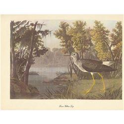 c1950 Audubon Print, Lesser Yellow-Legs