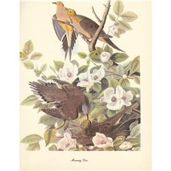 1950 Audubon Print, Mourning Dove