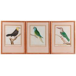Three early 19th century French hand colored lithograph of tropical birds.