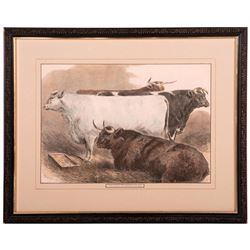 Colored Print of cattle at an English cattle show signed Sturgess and dated 1875.