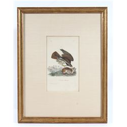 "John Audubon ""Common Buzzard"" Hand Colored Litho"