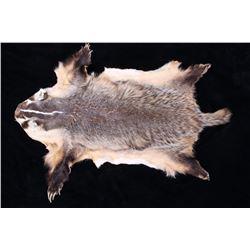 Montana Badger Fur Taxidermy Hide