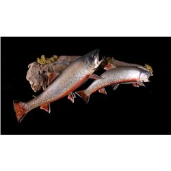 Brook Trout Taxidermy Wall Mount