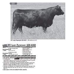 Lot - 3 - ICC Lady Payweight 428-6322