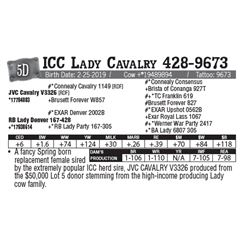 Lot - 5D - ICC Lady Cavalry 428-9673