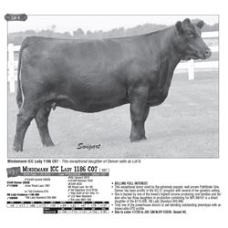 Lot - 9 - Mindemann ICC Lady 1186 C07 [ OSF ]