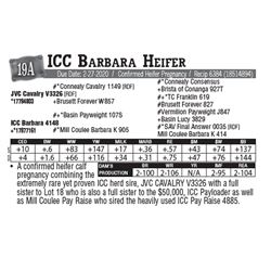 Lot - 19A - ICC Barbara Heifer