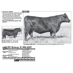 Lot - 21 - ICC Barbara K 905-6337