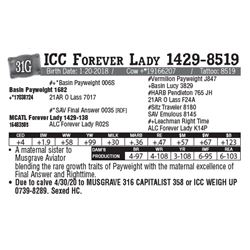 Lot - 31G - ICC Forever Lady 1429-8519