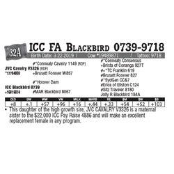 Lot - 32A - ICC FA Blackbird 0739-9718