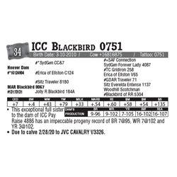 Lot - 34 - ICC Blackbird 0751