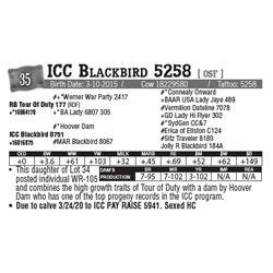 Lot - 35 - ICC Blackbird 5258 [ OSF ]