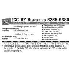 Lot - 35A - ICC BF Blackbird 5258-9680