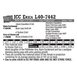 Lot - 37 - ICC Erica L40-7442