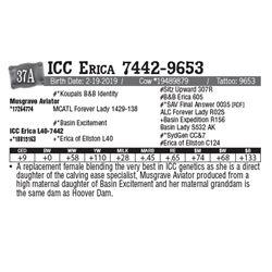 Lot - 37A - ICC Erica 7442-9653