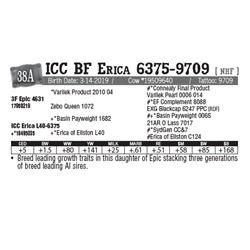 Lot - 38A - ICC BF Erica 6375-9709 [ NHF ]