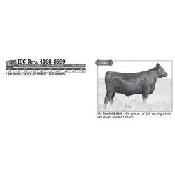 Lot - 45A - ICC Rita 4168-8599