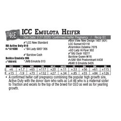 Lot - 46E - ICC Emulota Heifer